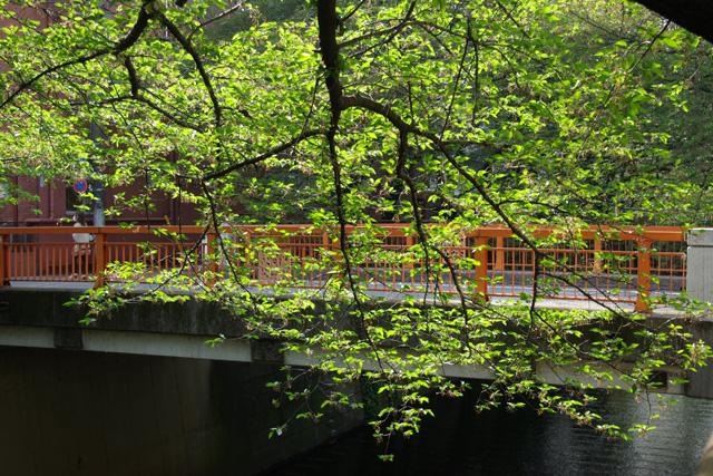20120424_megurogawa_1.jpg