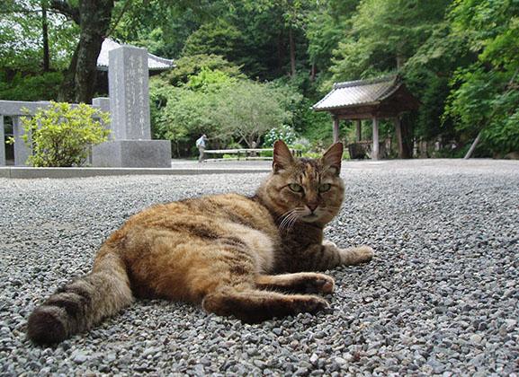 20140621_myohonji_neko.jpg